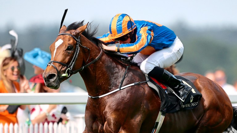 Gleneagles: is the sire of Stringston Farm's filly, a half-sister to Rekindling