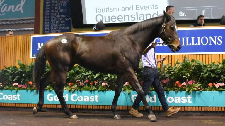 Magic Millions: Paul Perry went to A$100,000 to secure an untried three-year-old Stratum filly