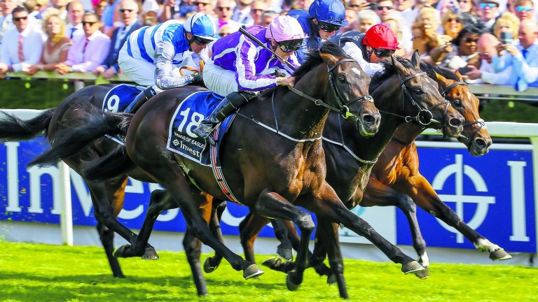 Wings Of Eagles: looked a natural fit for the French stallion ranks