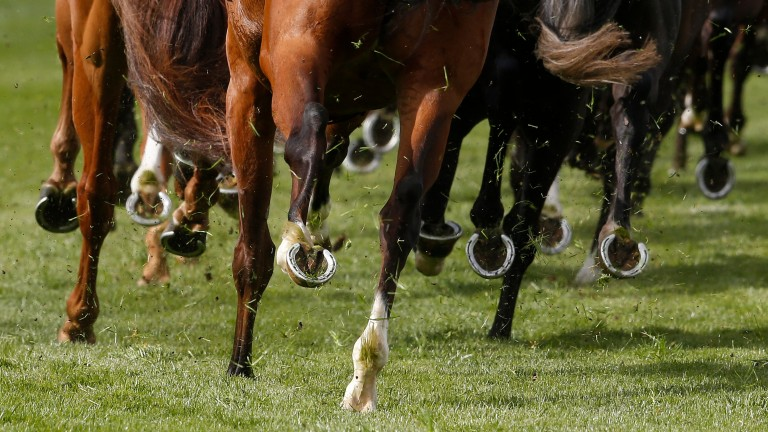 ANZ Bloodstock News is the number one source of news and information for the bloodstock industry in Australia and New Zealand