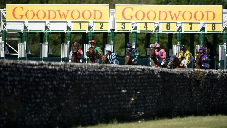 Runners break from Goodwood's 5f start