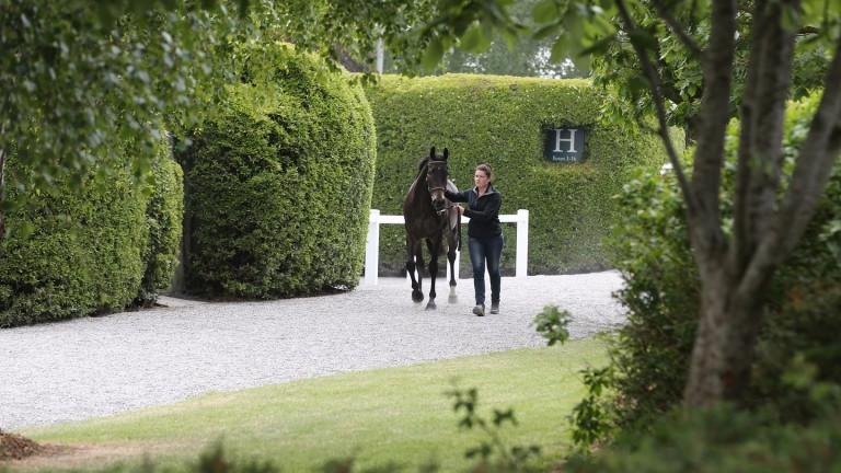 Goffs: the location of the Land Rover Sale on Tuesday and Wednesday