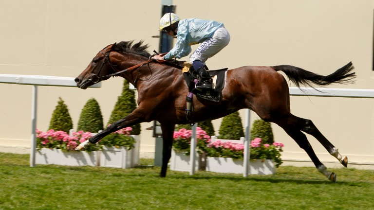 July Sale entrant Arab Spring lands the 2014 Duke of Edinburgh Stakes at Royal Ascot
