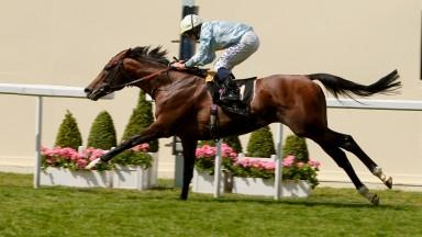 July Sale entrant Arab Spring lands the 2014 Duke of Edinburgh Stakes at Royal Ascot