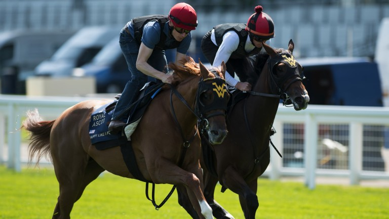 Happy Like A Fool (left) works at Ascot last week in preparation for the Queen Mary