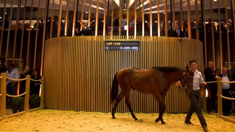Parabellum in the Arqana ring before selling to John Ferguson for €2.6 million