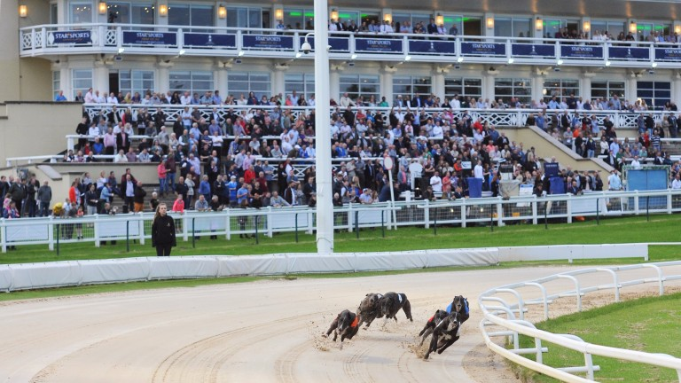 The dogs take the first bend in the Greyhound Derby second round heats