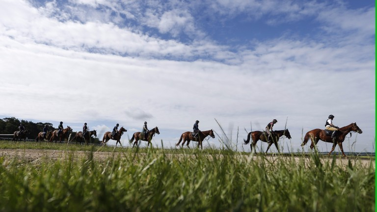 Newmarket: who has been impressing on the gallops?