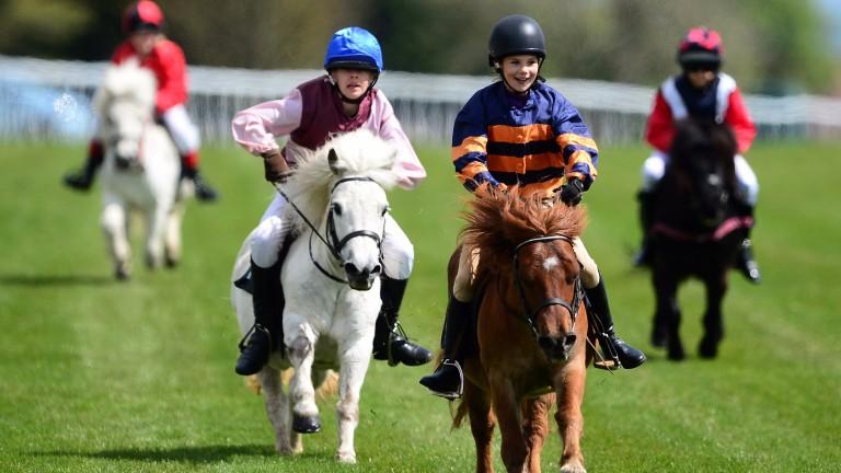 Shetland ponies: heading to Newmarket