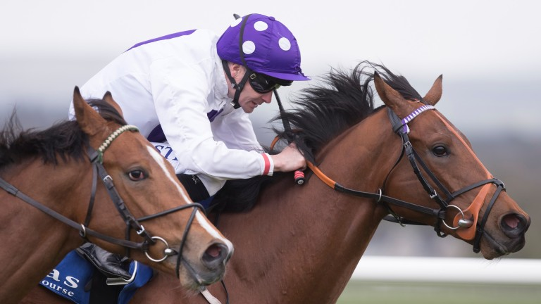 T For Tango: trainer James Nash delighted to have Pat Smullen on board in Windsor Castle