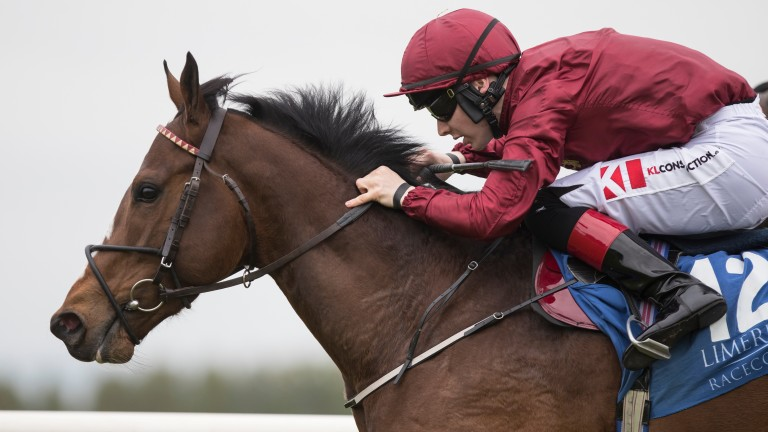 True Valour: trainer Johnny Murtagh expects him to outrun odds of 33-1 in the Jersey