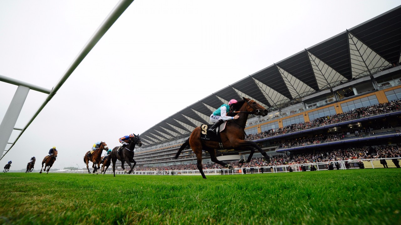 No victory for Churchill as Barney Roy claims Palace Stakes