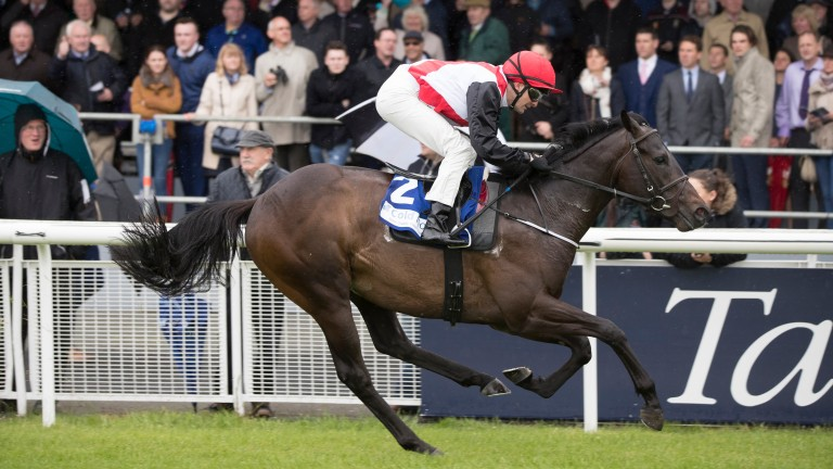 Brother Bear made a big impression in his Listed win at the Curragh
