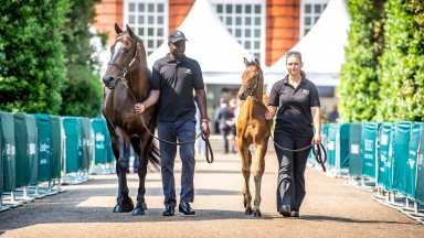 Lot 11: Baldovina, in foal to Le Havre, and her Muhaarar filly foal are led around the Orangery at Kensington Palace before the pair were sold to Alastair Donald for £300,000
