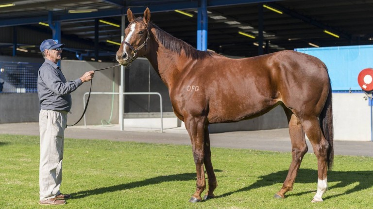 Scarlet Billows: topped broodmare session at Great Southern Sale