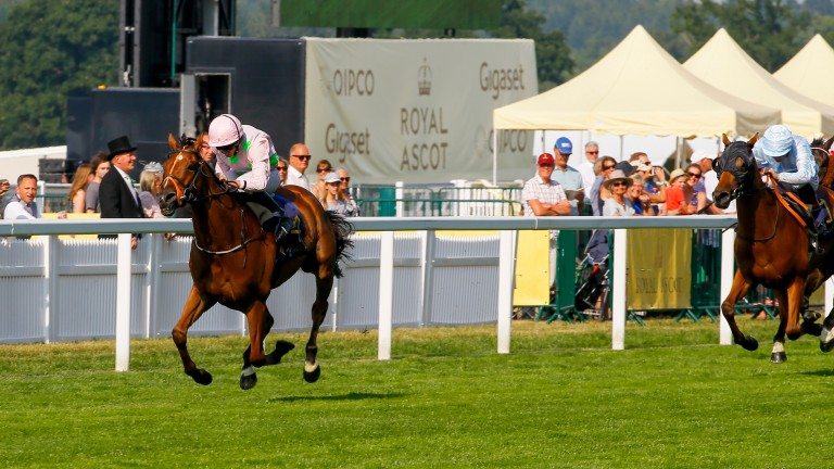 Thomas Hobson gallops clear to claim a third Ascot Stakes for Willie Mullins and Ryan Moore