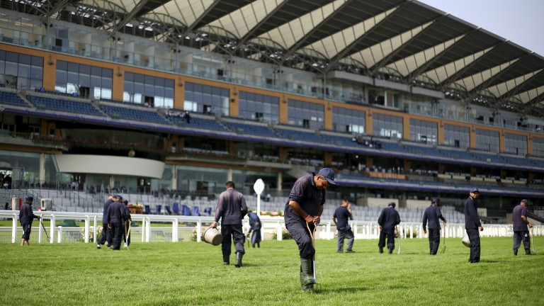 Perfect pitch: groundsmen tend to the final furlong before racing begins