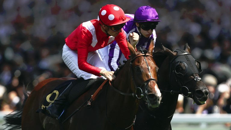 Le Brivido: Jersey Stakes winner is the highlight of Siyouni's third crop