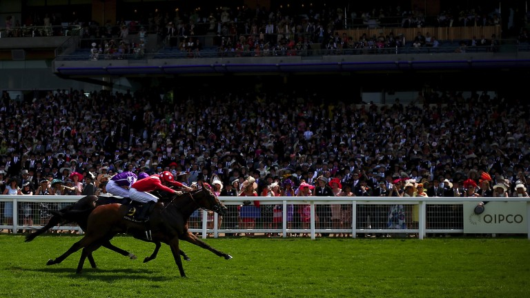 Le Brivido (near side) wins the Jersey Stakes - a spectacular dividend on Voute's first ever breeze-up investment
