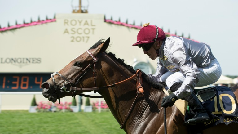 Qemah: two from two at Royal Ascot having won the Duke of Cambridge Stakes in style