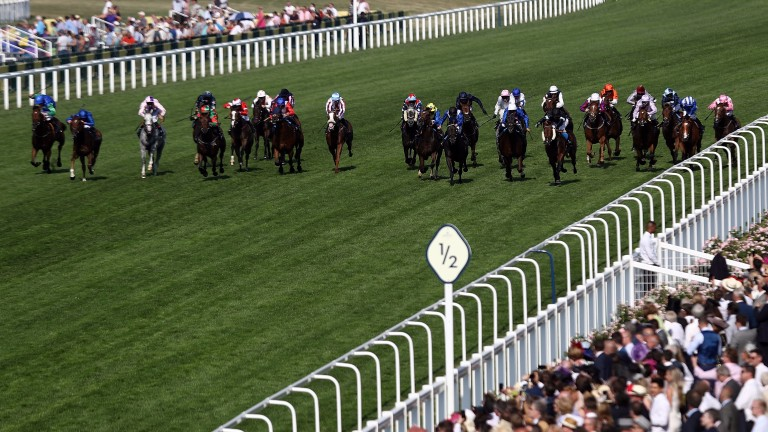 Runners in the Royal Hunt Cup