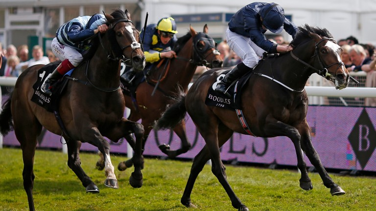 US Army Ranger: pictured finishing second to Western Hymn in the Ormonde Stakes, will run in the Queen Alexandra