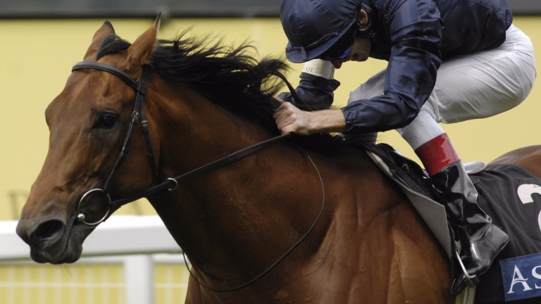Duke Of Marmalade: won five consecutive Group 1s but was prematurely rejected in the sales ring