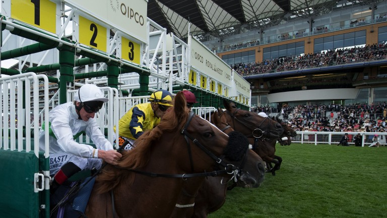 Out in front of the stands: runners break away from the stalls from their new starting position in the Queen's Vase