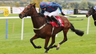 PUNCHESTOWN WED 14 OCT SEPTEMBER 2015  PICTURE: CAROLINE NORRIS  PETUNA RIDDEN BY SEAN HOULIHAN WINNING THE MARES FLAT RACE