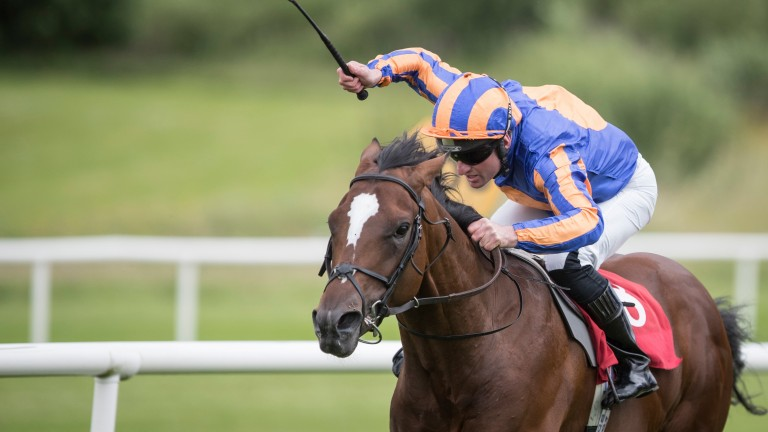 Rostropovich: son of Frankel on his way to victory on Sunday
