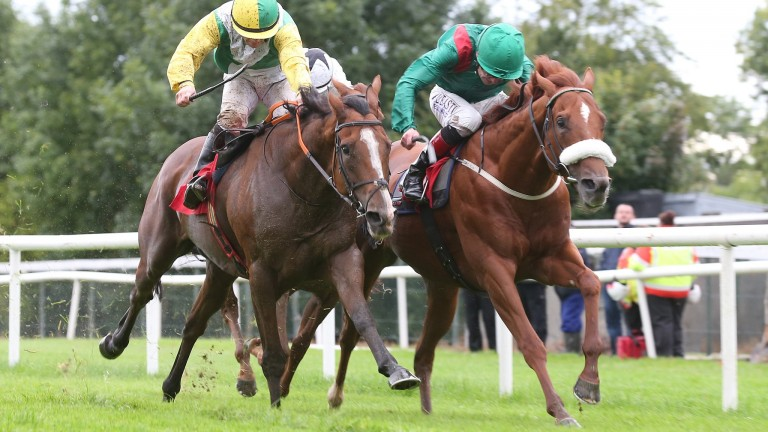 Massayan: will be hard to beat in the Tipperary feature