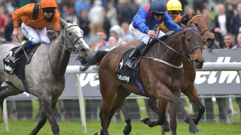 Clever Cookie: Yorkshire Cup winner drawn on outside of the field at Newcastle on Saturday