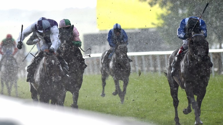 Breton Rock (left): bids to repeat his win in the Betway Criterion Stakes at Newmarket last year