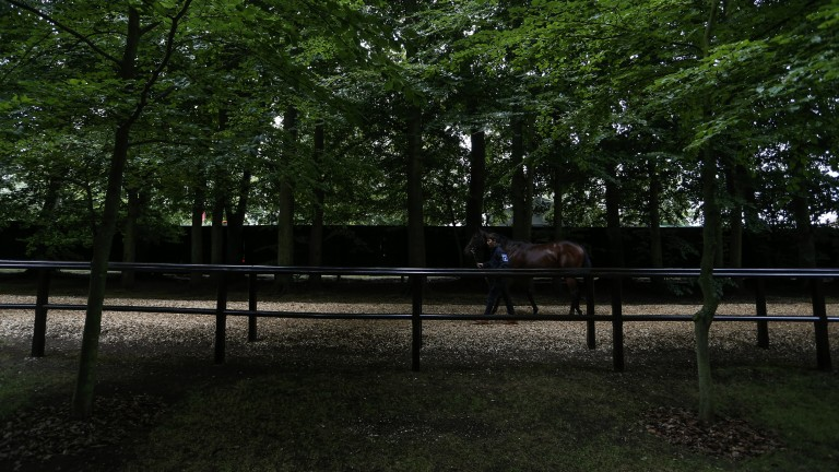Race ready: a runner prepares for action in the shaded pre-parade on the July course