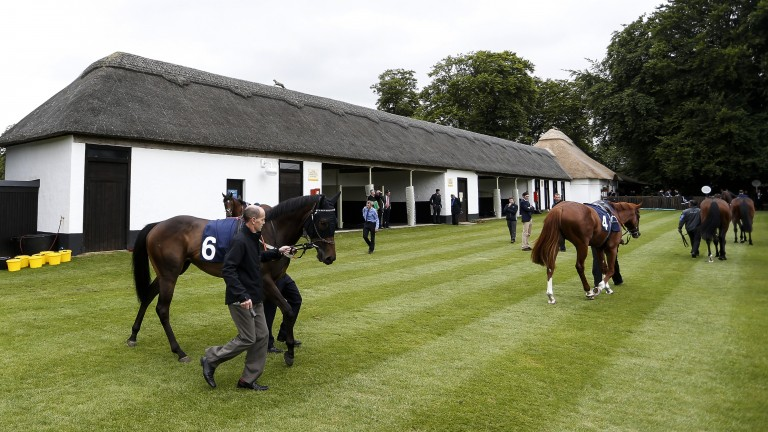 Saddle up: runners circle the thatched saddling boxes ahead of the 1m4f handicap