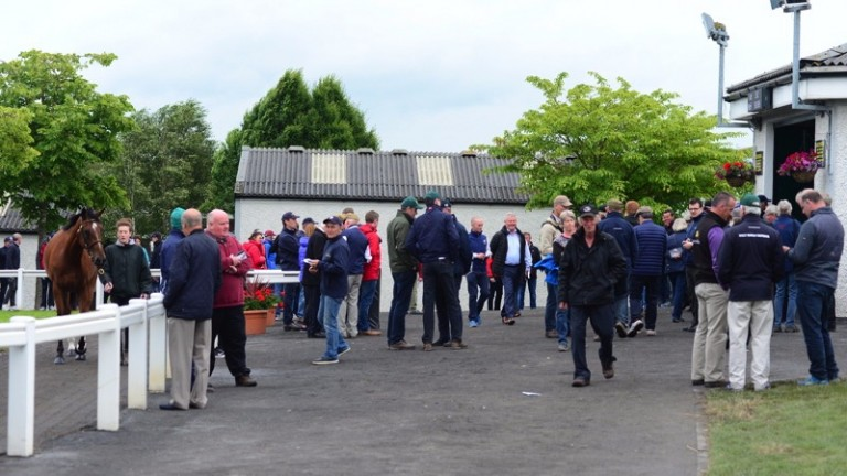 Plenty of people in attendance at the second day of the Tattersalls Ireland Derby Sale on Thursday