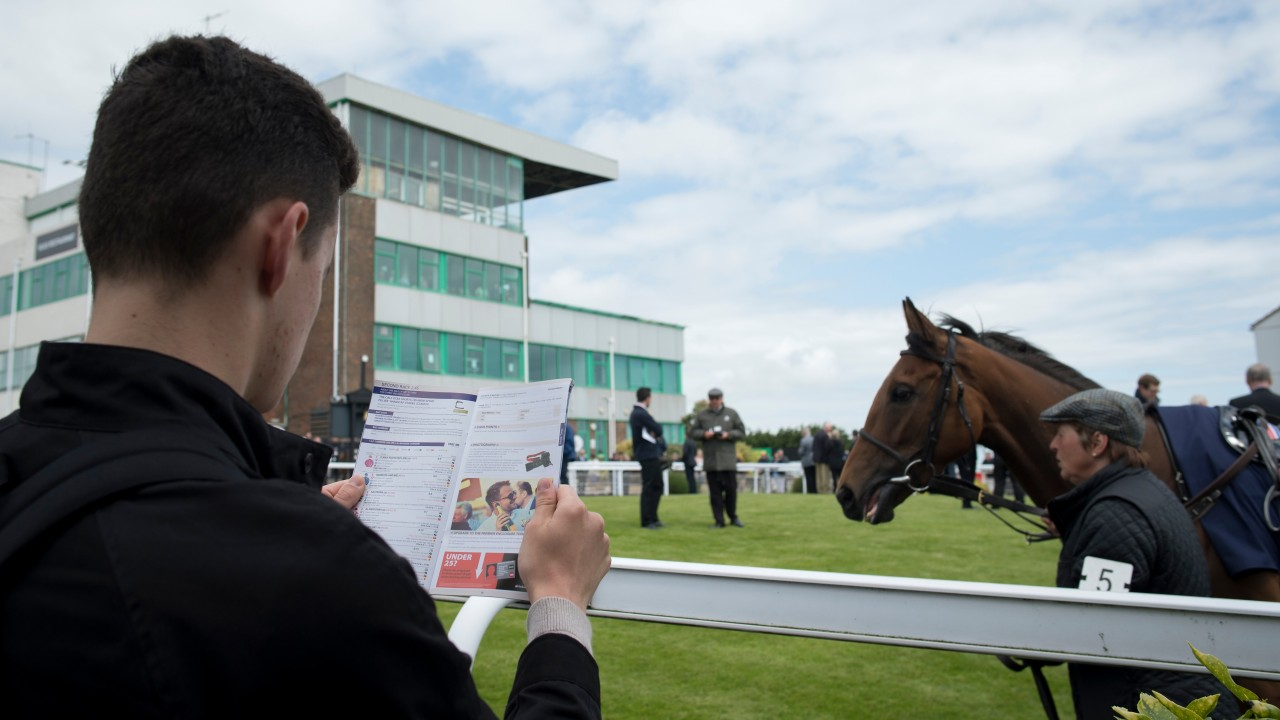 Image result for horse racing form studying