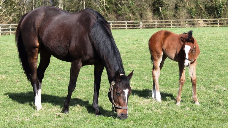 Coolmore's brilliant broodmare You'resothrilling with daughter Happily as a foal