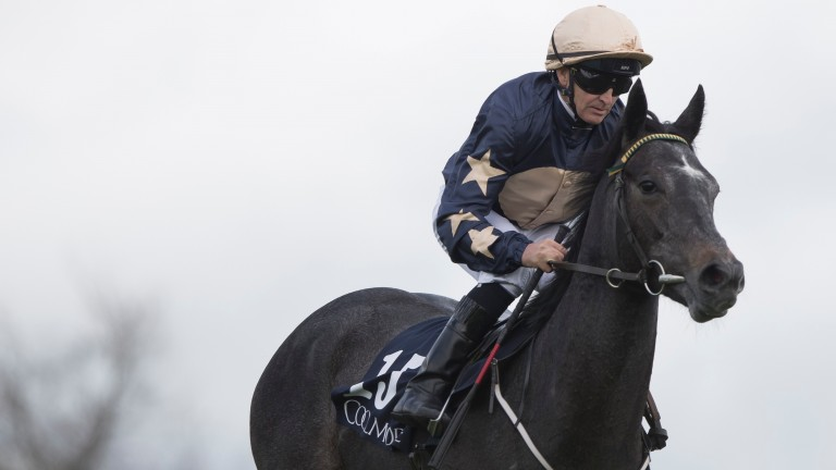 Too Familiar, trained by Johnny Murtagh, is unbeaten in two career starts