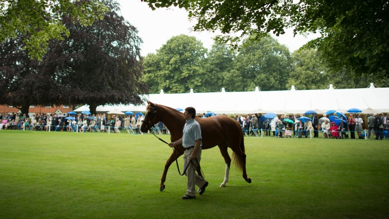 Dawn Approach at Darley's stallion parade at Dalham Hall Stud in Newmarket