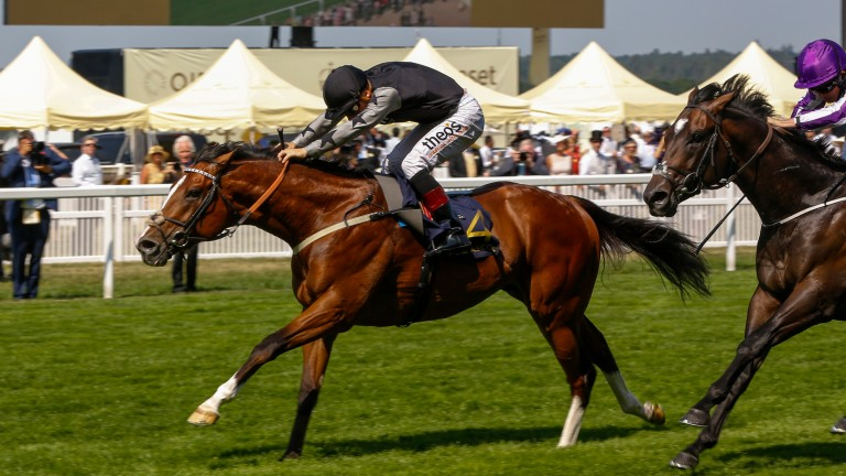 Rajasinghe: won the Coventry Stakes at Royal Ascot and sets the standard here