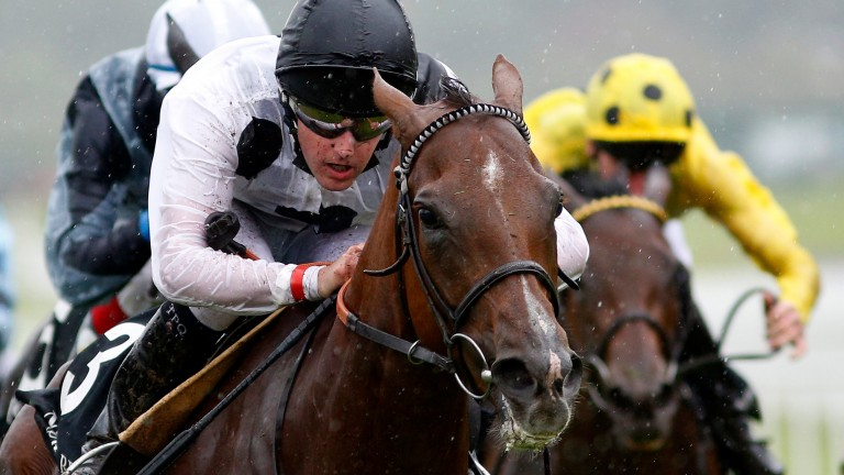 Ribbons: a homebred Group 1 winner for Elite Racing Club, a nation-wide syndicate
