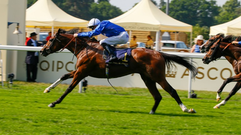 Barney Roy strides clear of the opposition in the St James's Palace Stakes