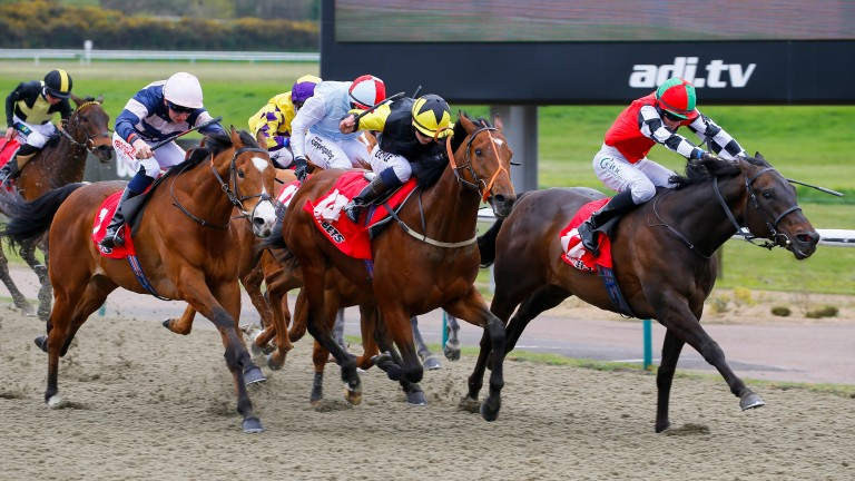Lingfield: attracted some quality fields for the All-weather Finals