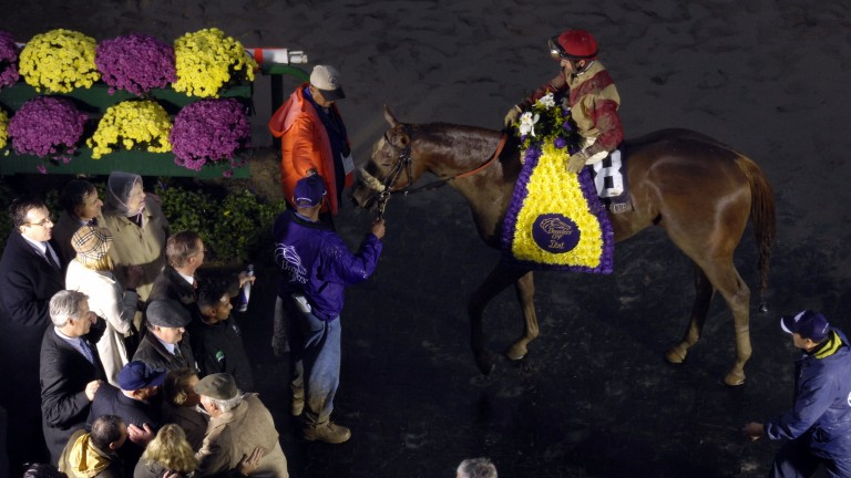 Corinthian: after winning the Breeders' Cup Dirt Mile