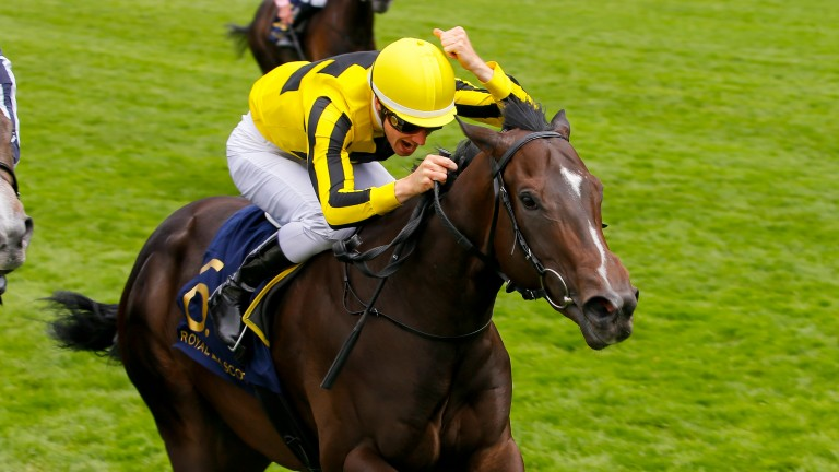 Different League: is one of the runners helping her sire do well with his first runners