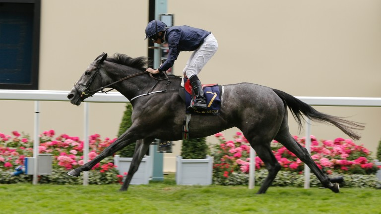 Winter, pictured winning the Coronation Stakes, is likely to run in the Nassau at Goodwood