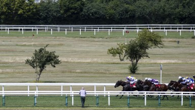 Sprint finish: a racegoer looks on as runners in the opening 5f handicap, won by Fethiye Boy, enter the closing stages