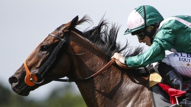 In full motion: a close-up shot of Spark Plug and Ryan Moore - successful in the Gala Stakes
