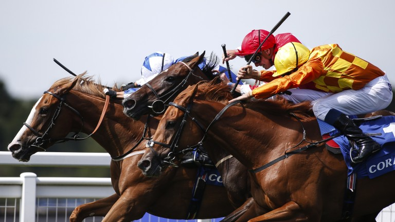 Flared nostrils: Tisbutadream (far side) narrowly prevails in a thrilling three-way finish